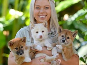 Australia Zoo's predictapups tip the NRL grand final
