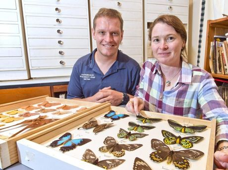 BEAUTIFUL BUTTERFLIES: Paul Guard with Susan Wright, Entomology Collection Manager at the Queensland Museum. The Guard family is donating Roger Guard's butterfly collection to the museum.
