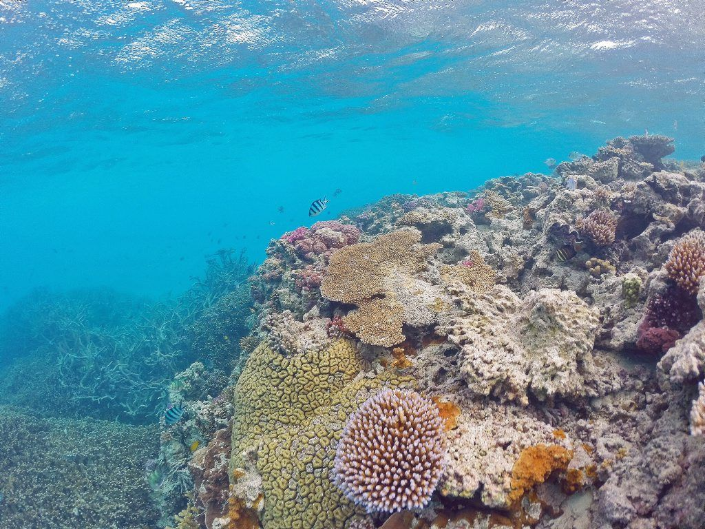 Sir David Attenborough will talk about the Great Barrier Reef while at a climate change summit in France.