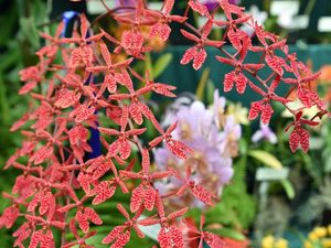 Fraser Coast orchid expert to share his experience