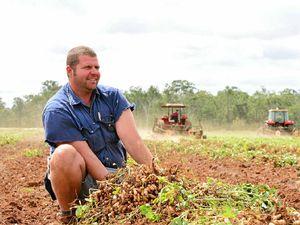 New peanut varieties bred for South Burnett climate