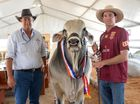 Andrew Olive and his sonRyan with Raglan Victory, a Brahman bull who won the interbreed GrandChampion Bull at Beef Australia 2015. Photo Allan Reinikka / The Morning Bulletin