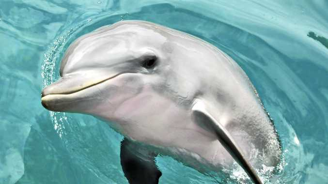 The youngest member of the Dolphin Marine Magic family Ji- Ling passed away on Tuesday evening.