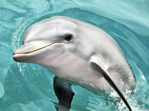 Youngest dolphin at Marine Magic dies