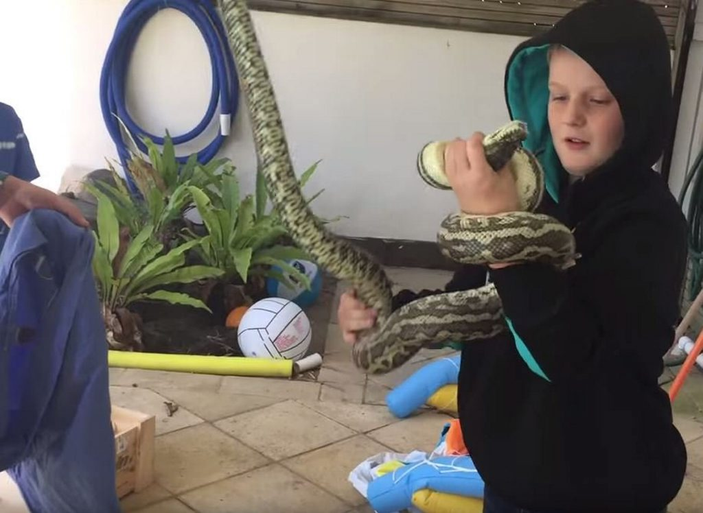 Noosa Heads eight-year-old Leroy Brown catches an injured python.