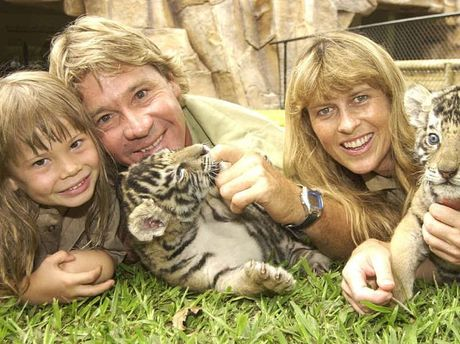 HAPPIER TIMES: Bindy, Steve and Terri Irwin play with two Bengal tiger cubs at Australia Zoo in 2003 and (right) coverage of the tragedy in the Daily.