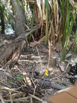 Jonathon Stenberg's hideout in the Northern Territory.