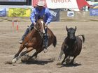 Record nominations for Warwick Campdraft