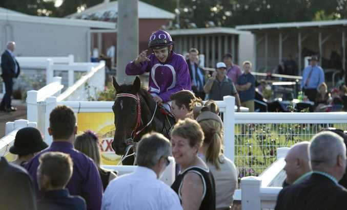 Toowoomba four-year-old Jumbo Prince about to embark on a Magic Millions campaign.
