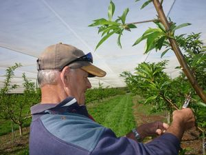 The cost of freight in the horticultural supply chain in SEQ