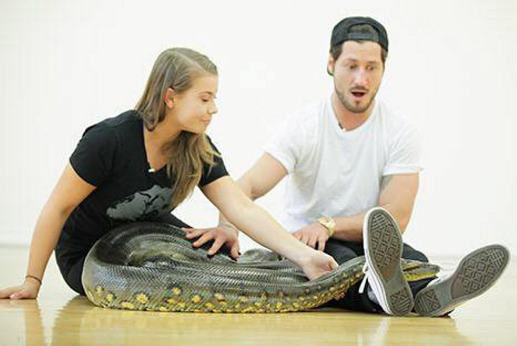 Bindi Irwin brings a boa constrictor into her Dancing With The Stars rehearsal with Val Chmerkovskiy.