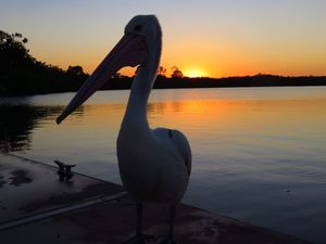 READER PHOTOS: Sunshine Coast in all its glory