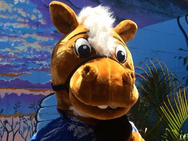 Pumpa The Wonder Horse