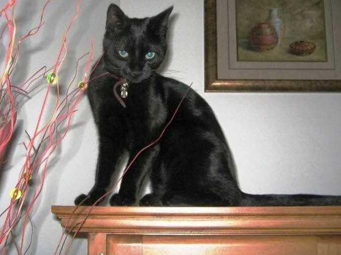 Deaf cat Salem has been missing since Friday.
