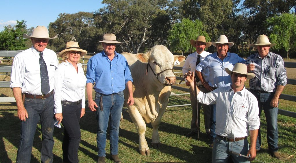 With the $30,000 top priced Charolais bull, Ascot Juggernaut, were (from left) Ascot Stud principals, Jim Wedge and Jackie Chard,