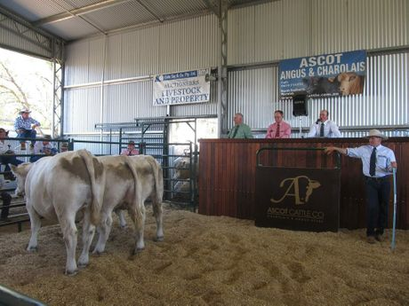 Three Charolais/Angus cross steers were auctioned at the Ascot Sale with the proceeds of the highest priced steer donated to the Cherish Women's Cancer Foundation.