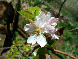 Celebrate nature's spring bounty