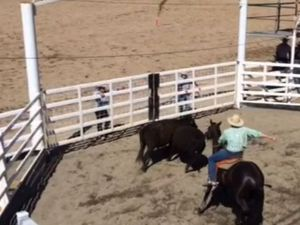 Bird's eye view of Warwick Campdraft action
