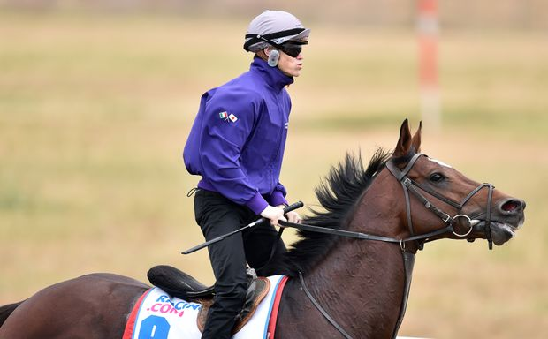 Craig Williams rides Arod in preparation for the Cox Plate at Werribbe racecourse in Melbourne, Wednesday, Oct. 21, 2015. (AAP Image/Julian Smith)