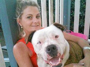 Dog stolen in Bundaberg, found dumped in Dalby