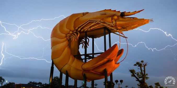 'The Electrical Prawn' by Early Bird Photography