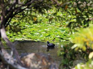 Council to clarify botanic garden strategy
