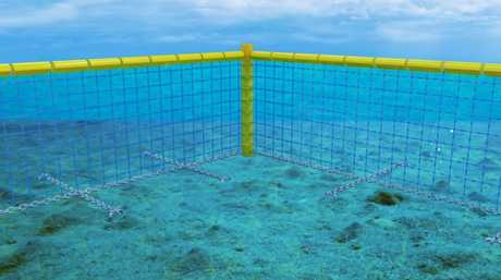 A safe and shark-free swimming environment without unnecessary harm to marine life.