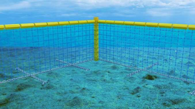 Shark barrier to stay where planned, says DPI