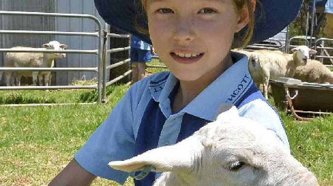 ON THE FARM: Withcott State School Year 3 student Isobel Barron at the Moo Baa Munch at Downlands College.