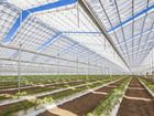 The retractable roof of the 4.3ha Young Sang & Co vegetable greenhouse, in North Gregory south of Bundaberg, starts to open. The structure is the first of its kind in Australia.