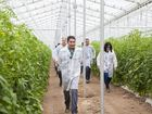 Cream of the greenhouse crop goes on show
