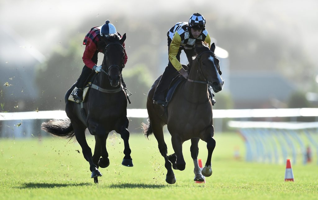 Ruling Dynasty (left) and High Moonlight are worked at Flemington racecourse in Melbourne on Tuesday. Phot: AAP Image/Julian Smith.