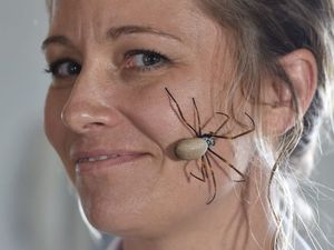 WATCH: Dundowran resident goes viral with a spider on face
