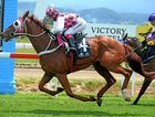 Major General with Brooke Ainsworth win race two at the Murwillumbah races on Melbourne cup day. Photo: John Gass / Tweed Daily News