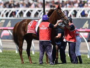 Red Cadeaux set to pull through, says trainer