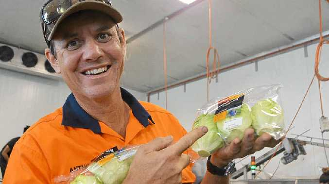 SMILING FACE: Anthony Staatz from Koala farms is proud to be the face of Baby Cos lettuce at Coles.