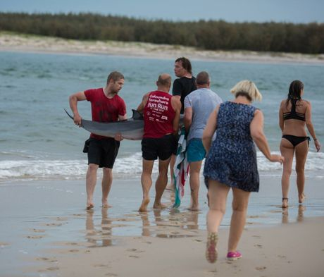 Michael Feekings captured these images of the effort to save a young dolphin that beached itself at Caloundra's Bulcock Beach.