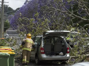 Tree falls on car in Mary St