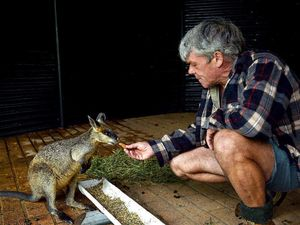 UPDATE: Police appeal for witnesses to wallaby shooting