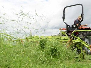 Too much of a good thing threatens Scenic Rim crop