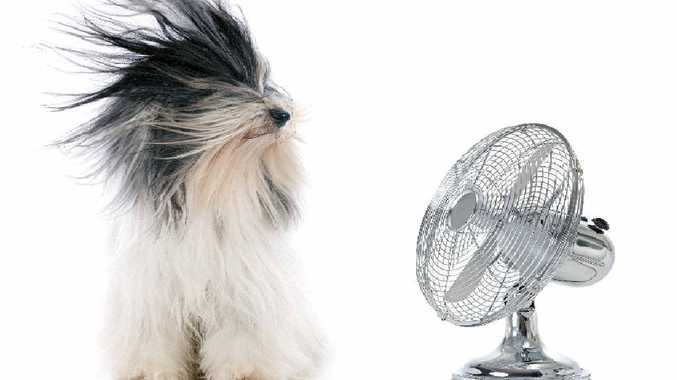 COOL IT: There may be affordable alternatives to blasting the family with high-powered fans to keep them cool this summer.