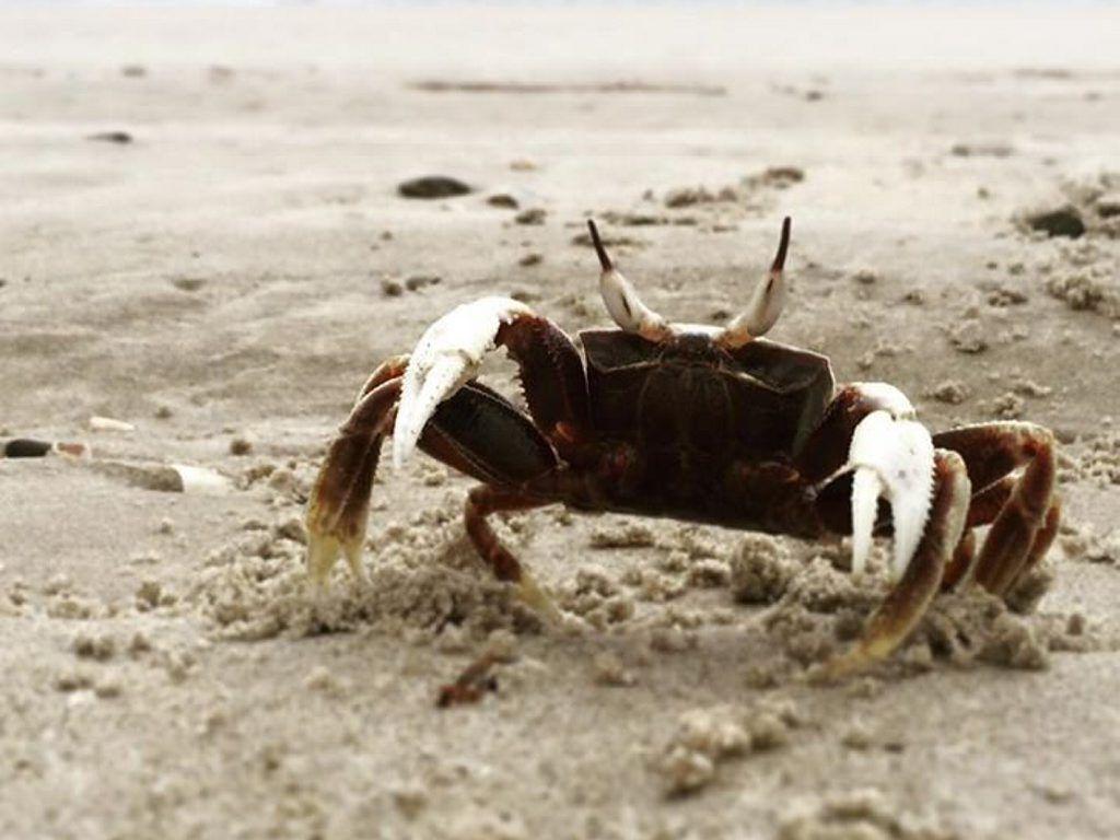 A crabby little friend.