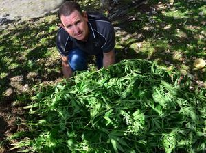 Cops pull pot crop from property near Pomona