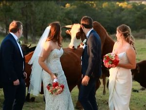 Frisky bull interrupts Toowoomba wedding