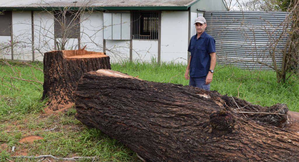 TALL TIMBER: Fairney view resident Brad Millie said Somerset Regional Council ordered a contractor to cut down a perfectly healthy ironbark tree.