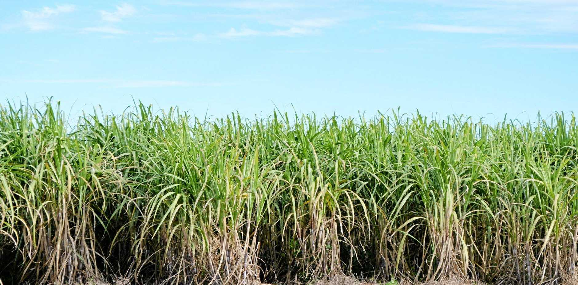 Innovation is being rewarded in the sugarcane industry.