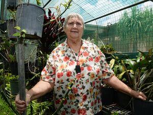 Brazen theft of stunning flowers from Avoca home