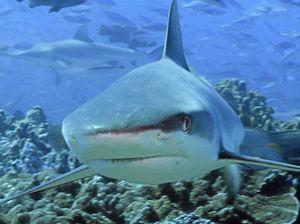 Hunt on for new shark mitigation strategies