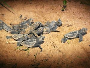 Turtle Care project impresses VIEW club members