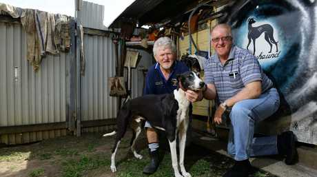 HEALERS: Veteran Goodna greyhound trainer Keiron Butler and Thagoona trainer Bill Warner have dispelled myths about greyhound racing and are promoting a new yellow and blue lure that will take the industry forward.